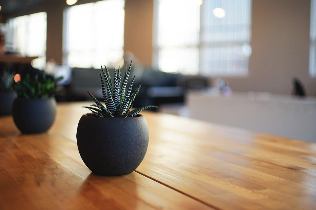 Kombinieren Sie Ihre Pflanzen in der Küche mit matten Tontöpfen und warmen Holzplatten - es entsteht ein modern-designtes und doch sehr gemütliches Ambiente. (Foto: Alvin Engler)