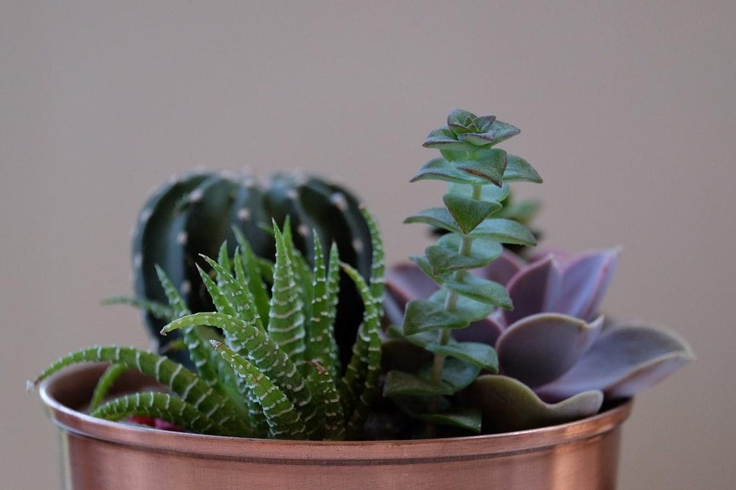 Sukkulenten sind extrem genügsame und pflegeleichte Pflanzen. Achja: Aufgrund ihrer Artenvielfalt sehen sie auch besonders interessant und schön aus. (Foto: Jason Zook)