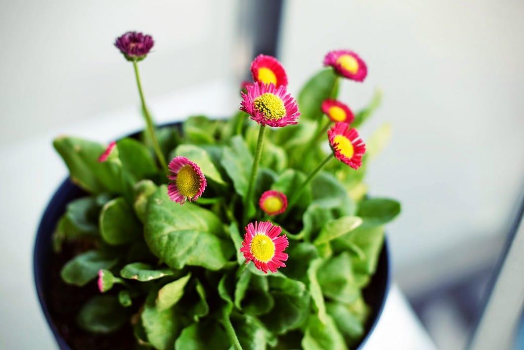 Blumen können als Küchenaccessoire bunte Farbtupfer setzen - und sind auch ein sehr schönes Mitbringsel zur Wohnungseinweihung. (Foto: Tim Gouw)