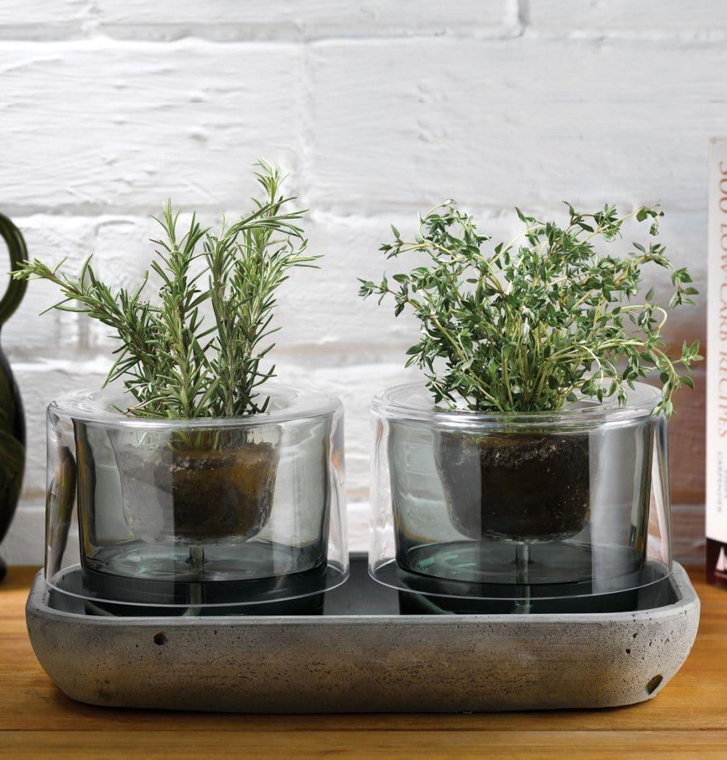 Roots, das smarte Bewässerungssystem. Ausgezeichnet mit dem GDA