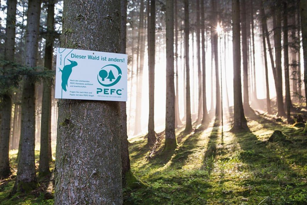 Dieser Wald ist PEFC-zertifiziert: Holz, das aus diesem Waldgebiet stammt, kann also unbedenklich zu einer ökologischen Küche verarbeitet werden. (Foto: PEFC Deutschland)