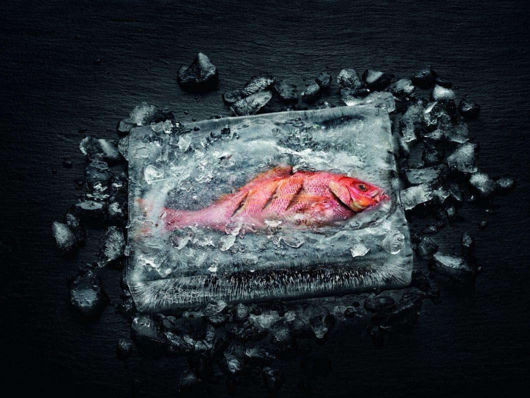 Einen Fisch fangfrisch im Eisblock zubereiten, ohne, dass das Eis rundherum schmilzt und den Fisch verwässert? Mit dem Miele Dialoggarer ist das nun möglich. (Foto: Miele)