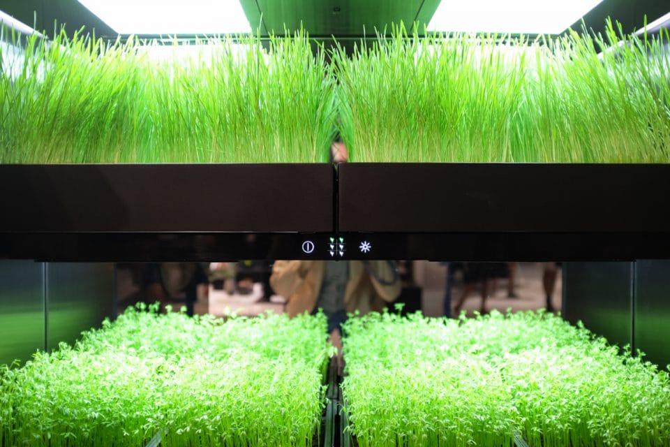 """Mit seinem Blaulicht kann Grundig nicht nur empfindliches Obst und Gemüse bis zu 3x länger erhalten und deren Nährstoffe schonen - auch der Kräutergarten lässt sich so in der eigenen Küche züchten. Smarte """"green technology"""". (Foto: Grundig/ ktchnmag)"""