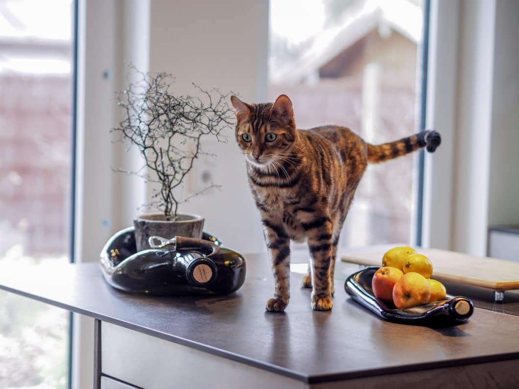 Auch Haustiger Leo gefällt es sichtlich in der neuen Küchenumgebung. Zum Schutz des Katers (und aus Gründen der Optik) wurden die Elektrogeräte größtenteils verborgen. (Foto: küchenART München)