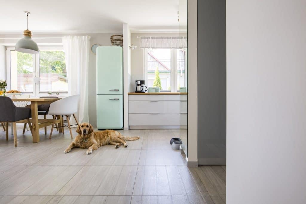 Es ist nicht unmöglich, aber doch eher unwahrscheinlich, dass Ihr Haustier lernt, diese schmalen Griffe aufzuziehen. Anders verhält es sich mit grifflosen Küchen. foto: stock/ photographee.eu)