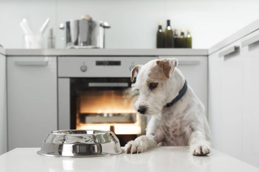 Hunde und Katzen werden in vielen Haushalten ganz selbstverständlich in der Küche gefüttert und dürfen sich frei bewegen. Da helfen 10 Tipps, wie Sie für eine haustiersichere Küche sorgen. (Foto: stock/urbans78)
