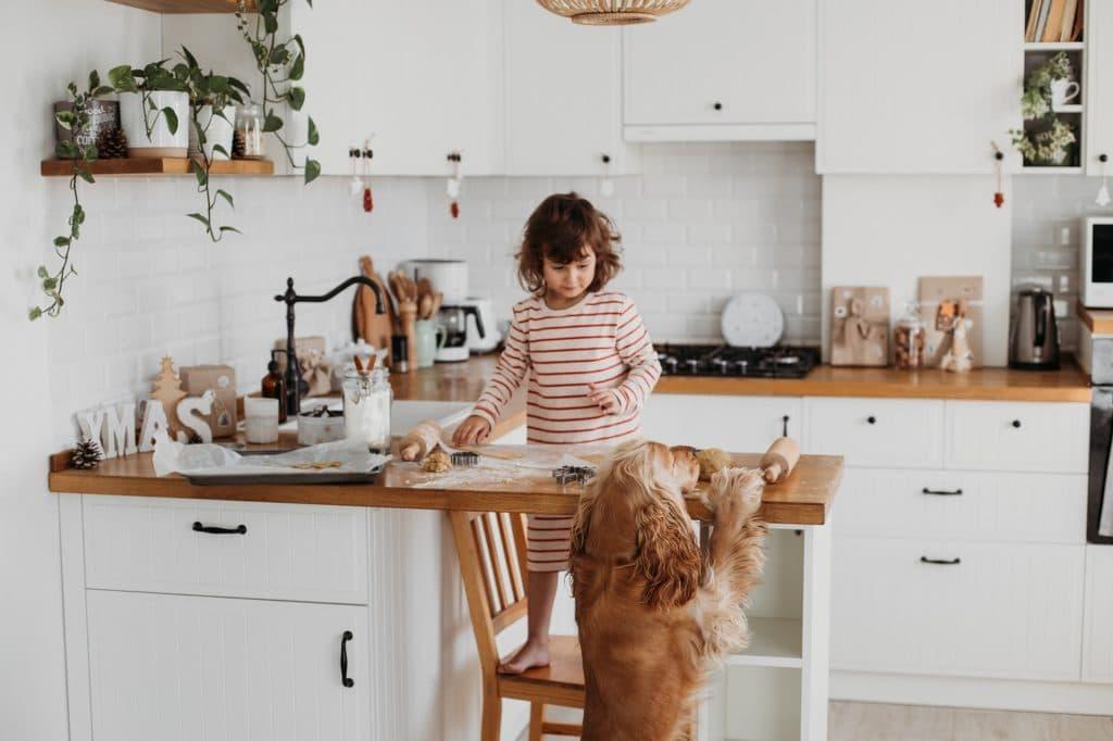 Pflanzen werden in der Küche am besten auf höheren Etagen aufbewahrt. Das schützt natürlich nicht vor anderen Versuchungen für die vierbeinigen Schleckermäuler. (Foto: stock/ sweetlaniko)