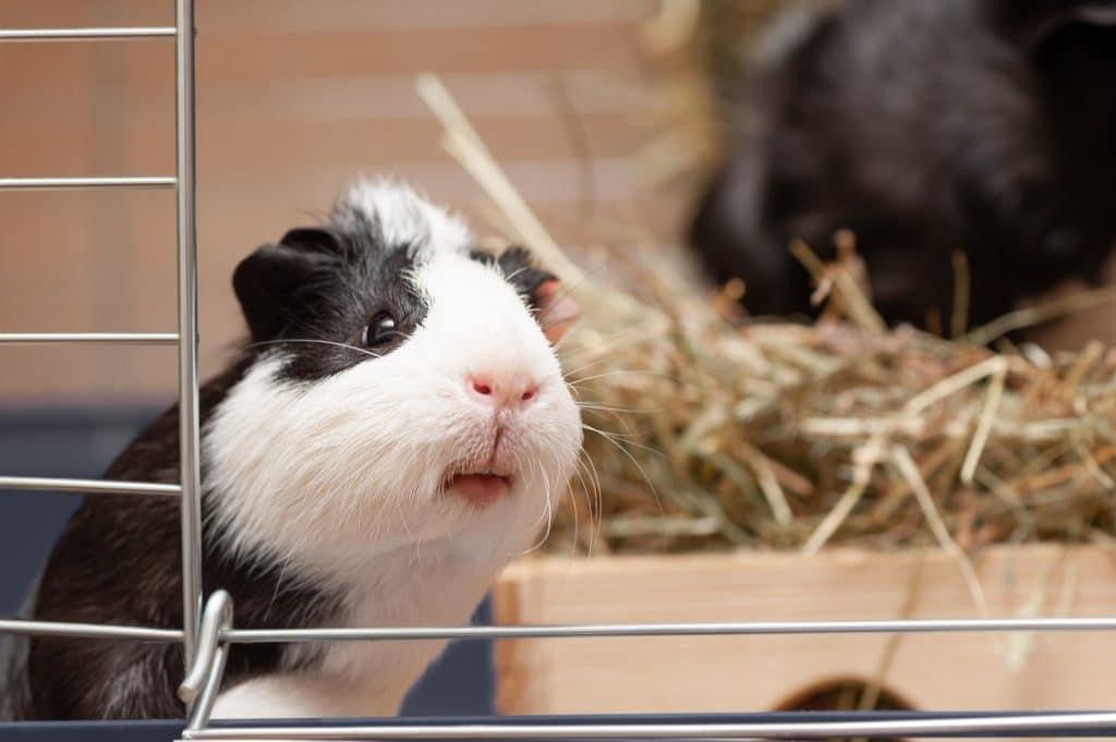 Wussten Sie, dass sich Kleintierstreu und Stroh über den Biomüll entsorgen lässt? (Foto: stock/ devmarya)