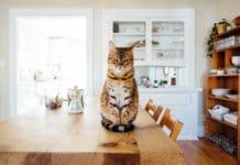 Haustiere in der Küche gehören selbstverständlich zum Alltag vieler Menschen. Doch wie ist es um die Sicherheit der Vierbeiner bestellt? (Foto: Paul Hanaoka)
