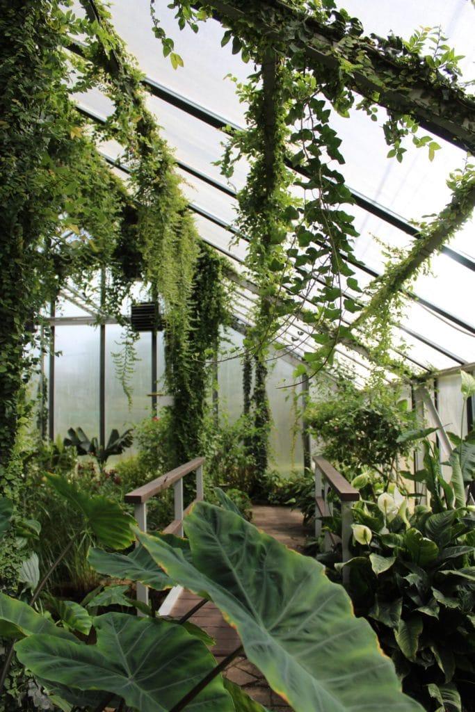 Das Gewächshausprinzip arbeitet mit hoher Luftfeuchtigkeit - und trägt so langsam, aber stetig zu einem gesunden und nährstoffreichen Wachstum von Pflanzen, Obst und Gemüse bei. (Foto: stock/ sabeephoto)